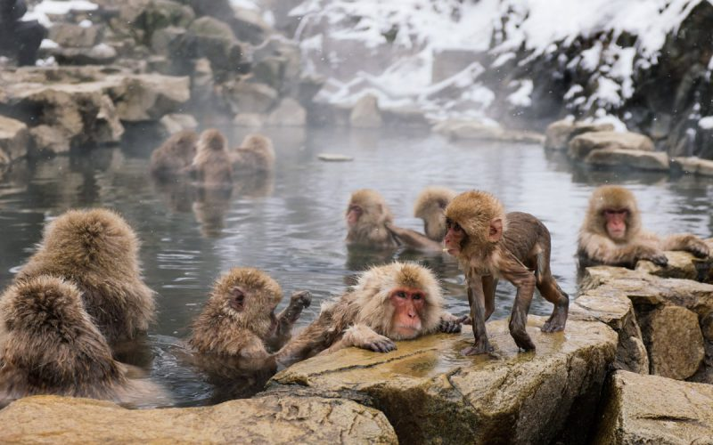 Lost in Translation II - snow monkeys & Osaka