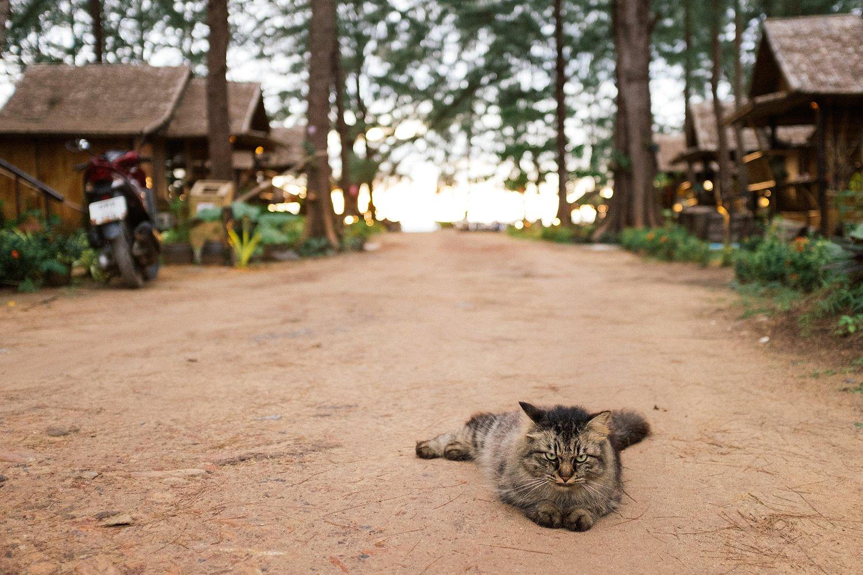 Thailand Koh Lanta 47