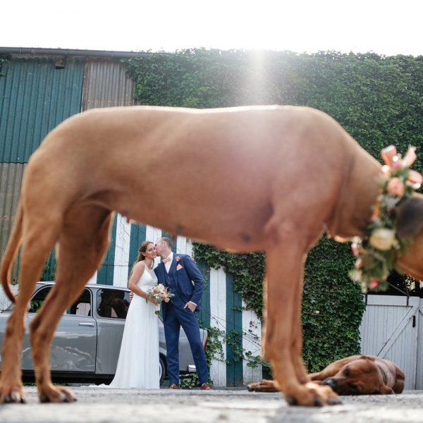 Ein Brautpaar, zwei Hunde & viele Emotionen
