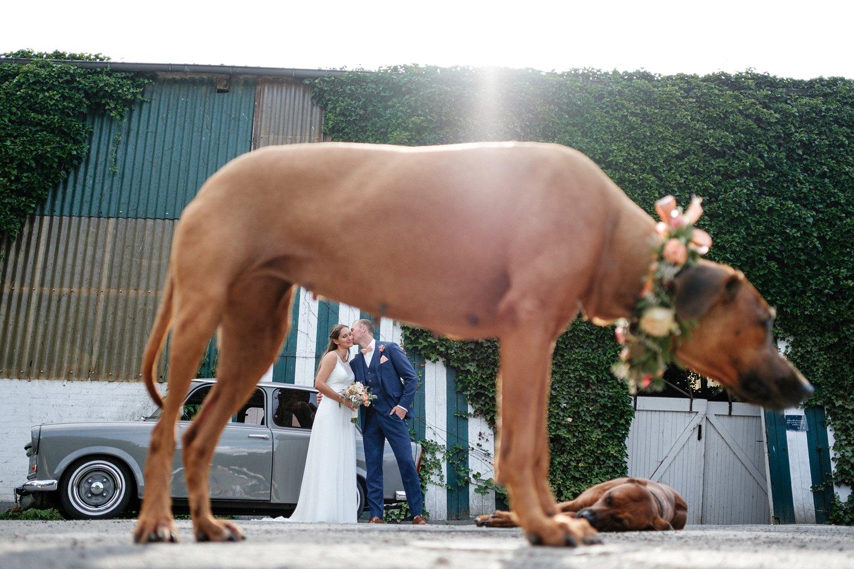 Hochzeit mit Hund freie Trauung 53