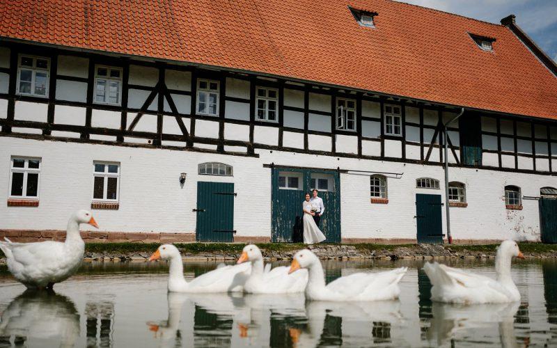Gans besondere Gäste auf dem Rittergut Besenhausen