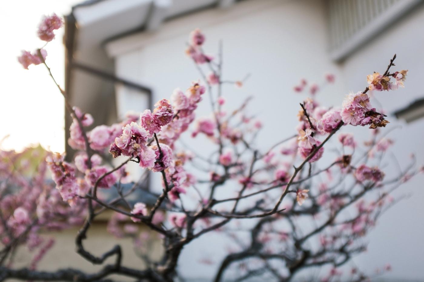 Japan Reise Kyoto Nara20