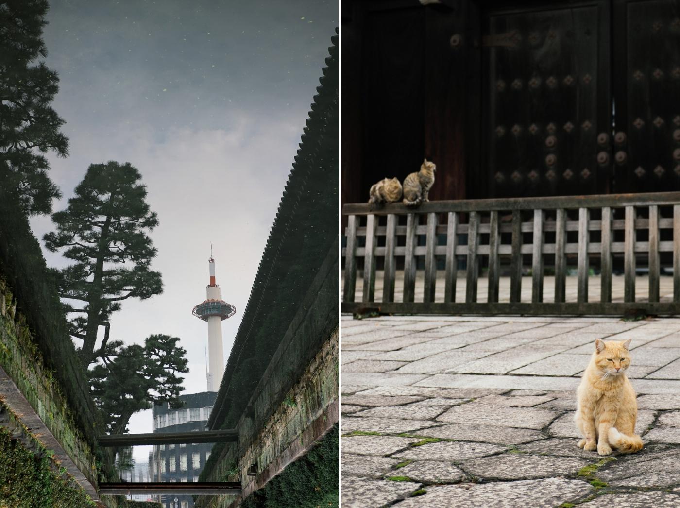Japan Reise Kyoto Nara34