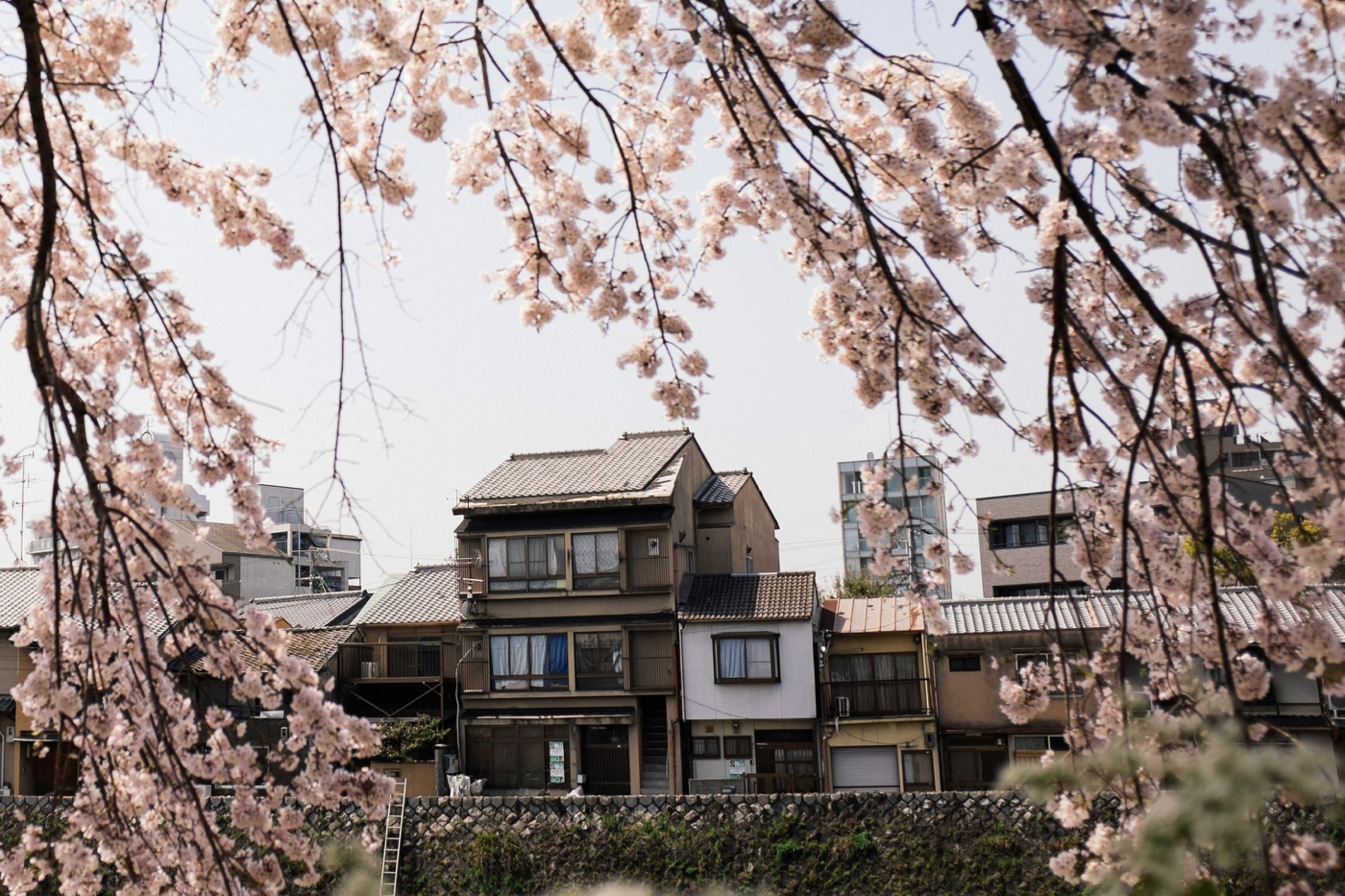 Japan Reise Kyoto Nara69