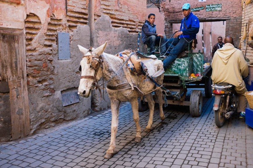 Reiseblog Marrakesch 68